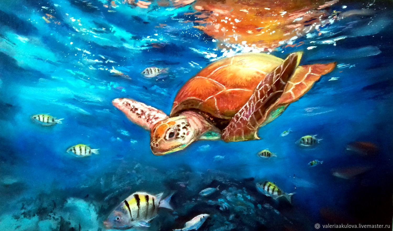 Sea turtle, Pictures, St. Petersburg,  Фото №1