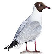 """Картины ручной работы. Ярмарка Мастеров - ручная работа Рисунок пастелью """"Озёрная чайка"""". Handmade."""