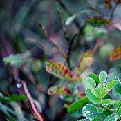 Fine art photographs handmade. Livemaster - original item Watercolor forest. Handmade.