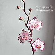 Цветы и флористика ручной работы. Ярмарка Мастеров - ручная работа Орхидея фаленопсис со сложной окраской из полимерной глины. Handmade.