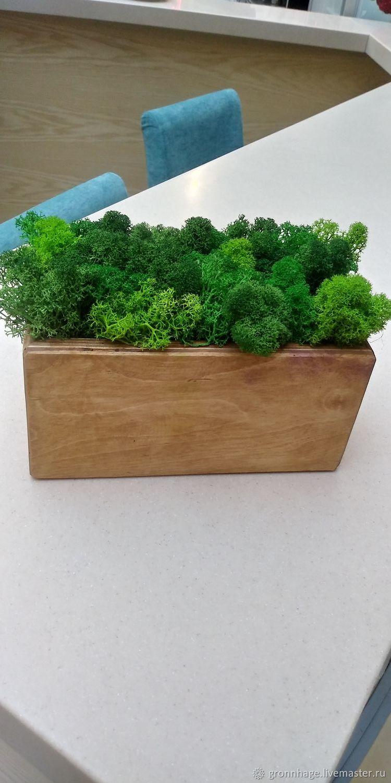 Image of: Stabilized Moss In A Wooden Planter Zakazat Na Yarmarke Masterov Jaoascom Kashpo Belgorod