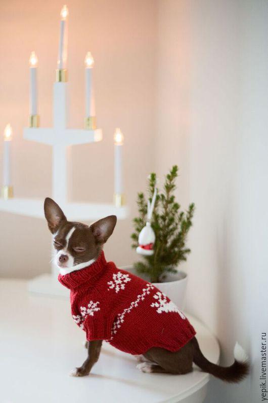 Одежда для собак, ручной работы. Ярмарка Мастеров - ручная работа. Купить свитер для собаки. Handmade. Жаккард, свитер для кошки