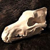 Фен-шуй и эзотерика handmade. Livemaster - original item The skull of a real Wolf(With fangs),free shipping,processed. Handmade.