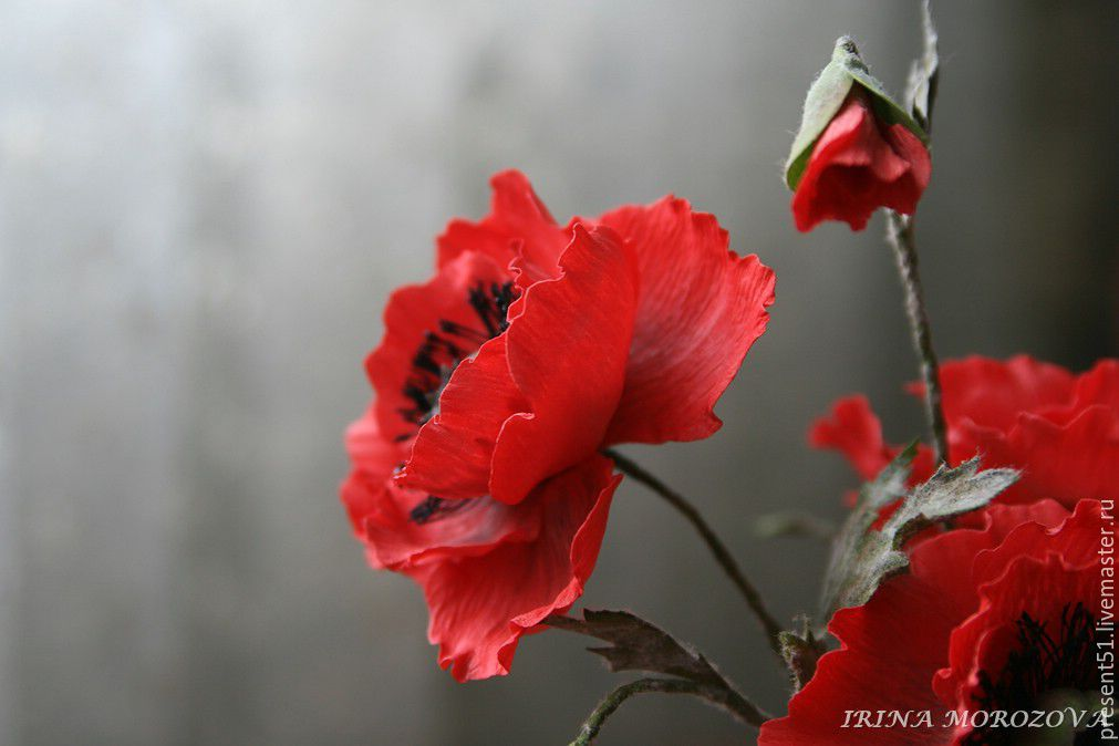 """Букет """"Полевые маки"""" из фоамирана, Цветы, Мурманск,  Фото №1"""