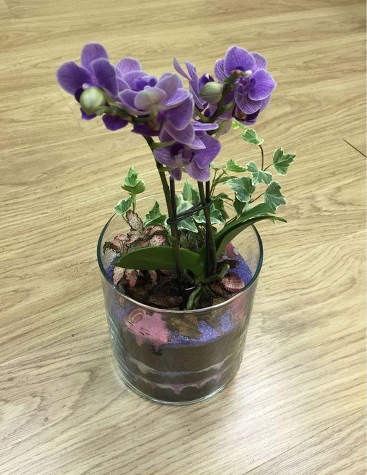 """Интерьерные композиции ручной работы. Ярмарка Мастеров - ручная работа. Купить Флорариум """"Орхидея Вайлет"""". Handmade. Флорариум, красивый подарок"""