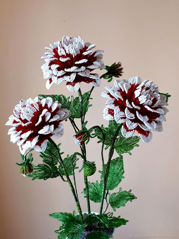 Король Георгин, Цветы, Ессентуки,  Фото №1