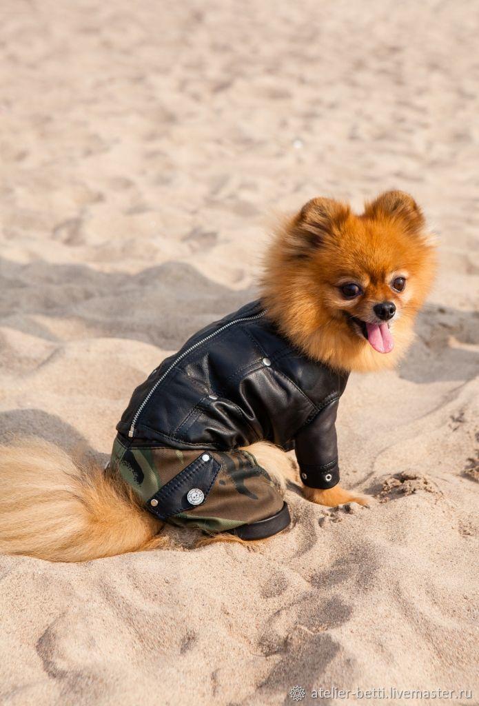 Одежда для питомцев: Куртка кожаная, Одежда для собак, Санкт-Петербург, Фото №1