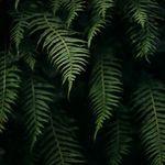 Алина (forest-night) - Ярмарка Мастеров - ручная работа, handmade
