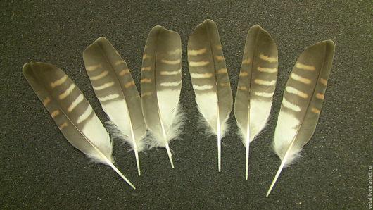 Перья кукушки. 10-11,5см,5шт,по 100 руб/штука.