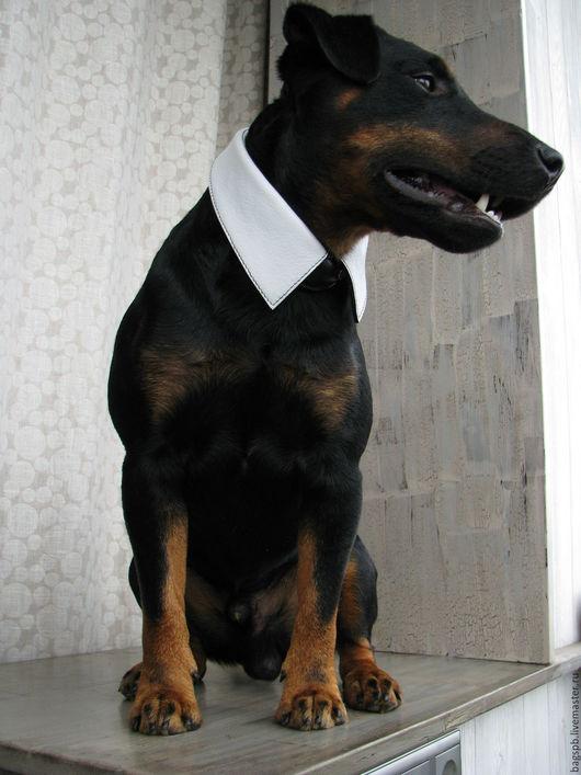 Аксессуары для собак, ручной работы. Ярмарка Мастеров - ручная работа. Купить ошейник бомба нарядный как воротник рубашки под галстук. Handmade.