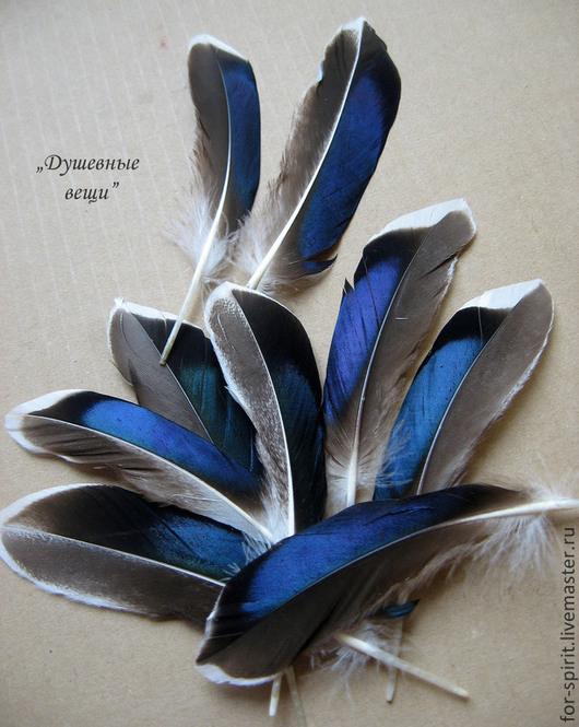 Другие виды рукоделия ручной работы. Ярмарка Мастеров - ручная работа. Купить Перо утки с отливом. Handmade. Перья