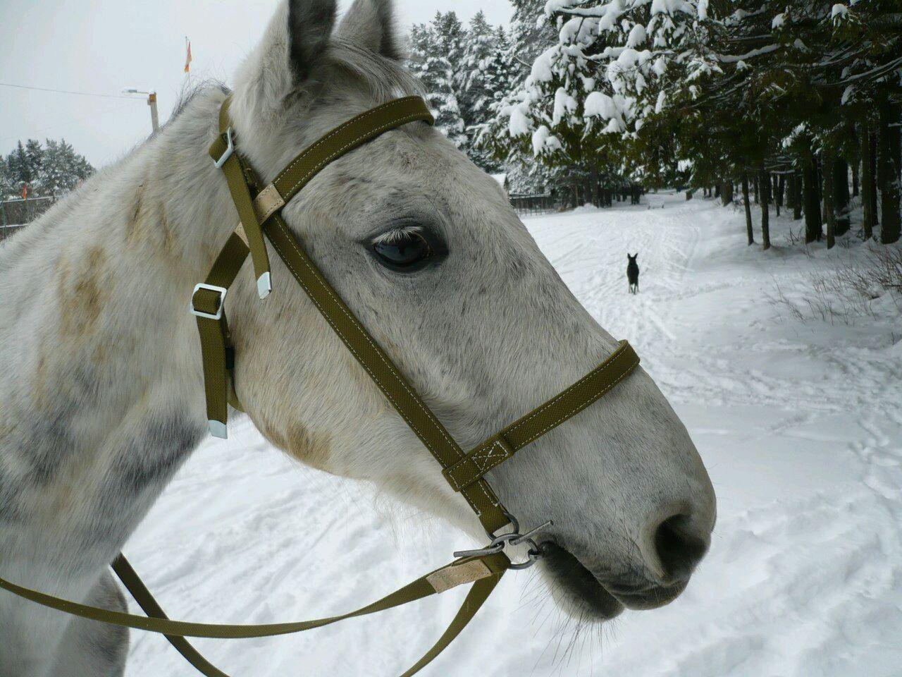 Рабочая узда с поводом для лошади, Уздечки, Киров,  Фото №1