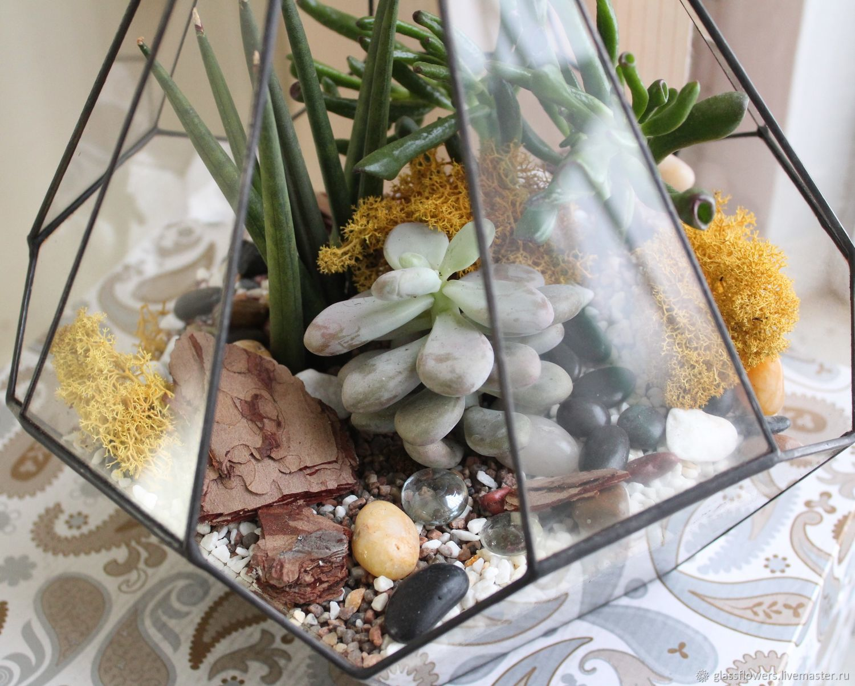 Флорариум. Большой флорариум в резной капле с суккулентами, Флорариумы, Санкт-Петербург,  Фото №1