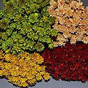 Материалы для творчества ручной работы. Ярмарка Мастеров - ручная работа Сухоцвет Hill Flowers Бразилия 100г. Handmade.
