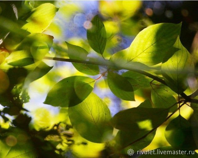Photo pictures nature summer, Bright green leaves 'Watercolors of the Sun', Fine art photographs, Moscow,  Фото №1
