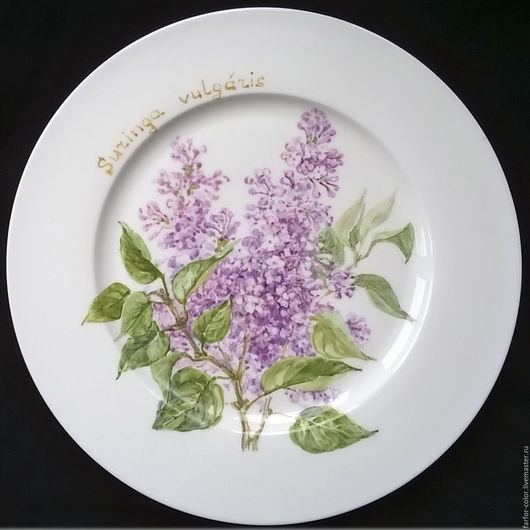 Роспись фарфора. Тарелка Сирень. Ботанические иллюстрации