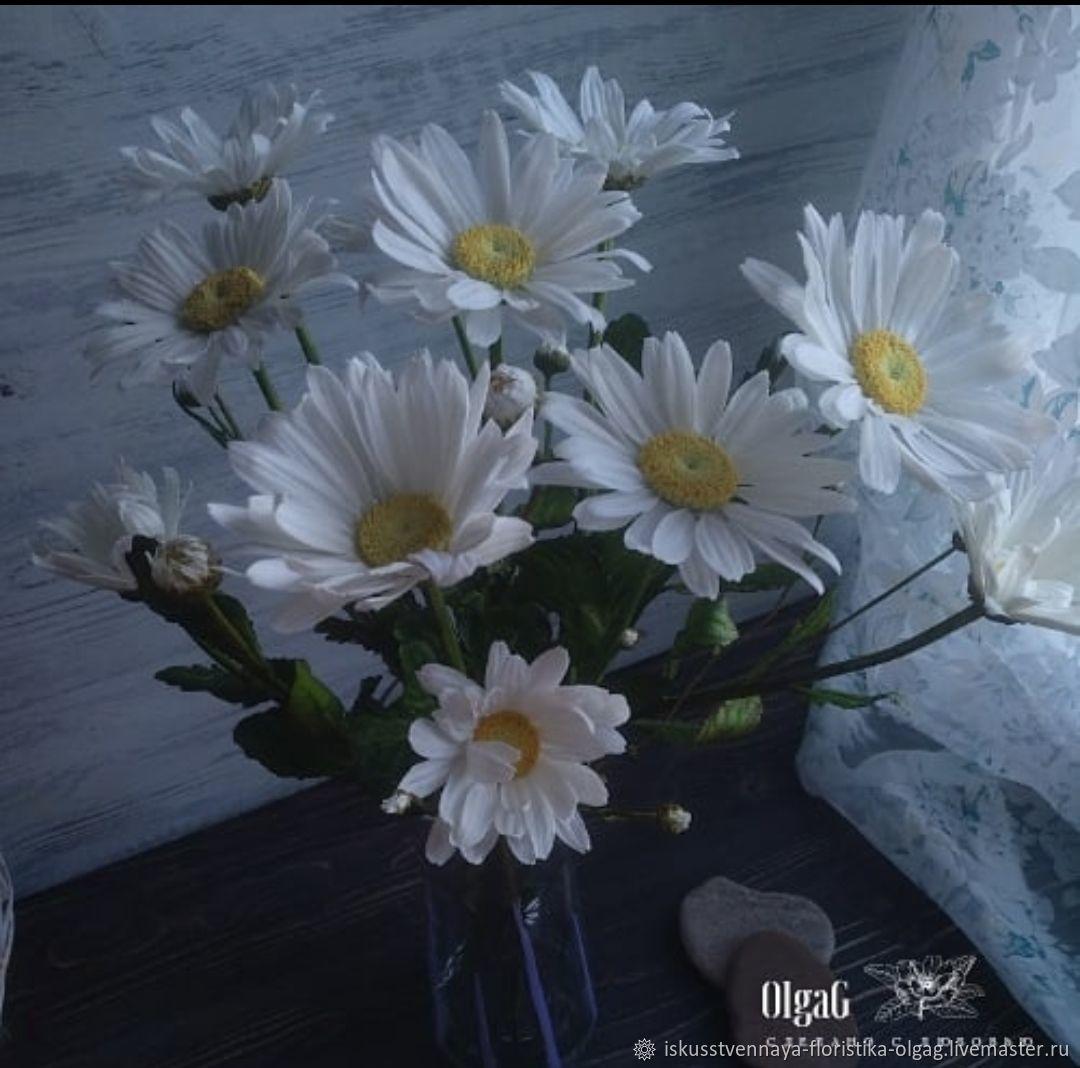 Ромашки Садовые, Цветы, Калининград,  Фото №1