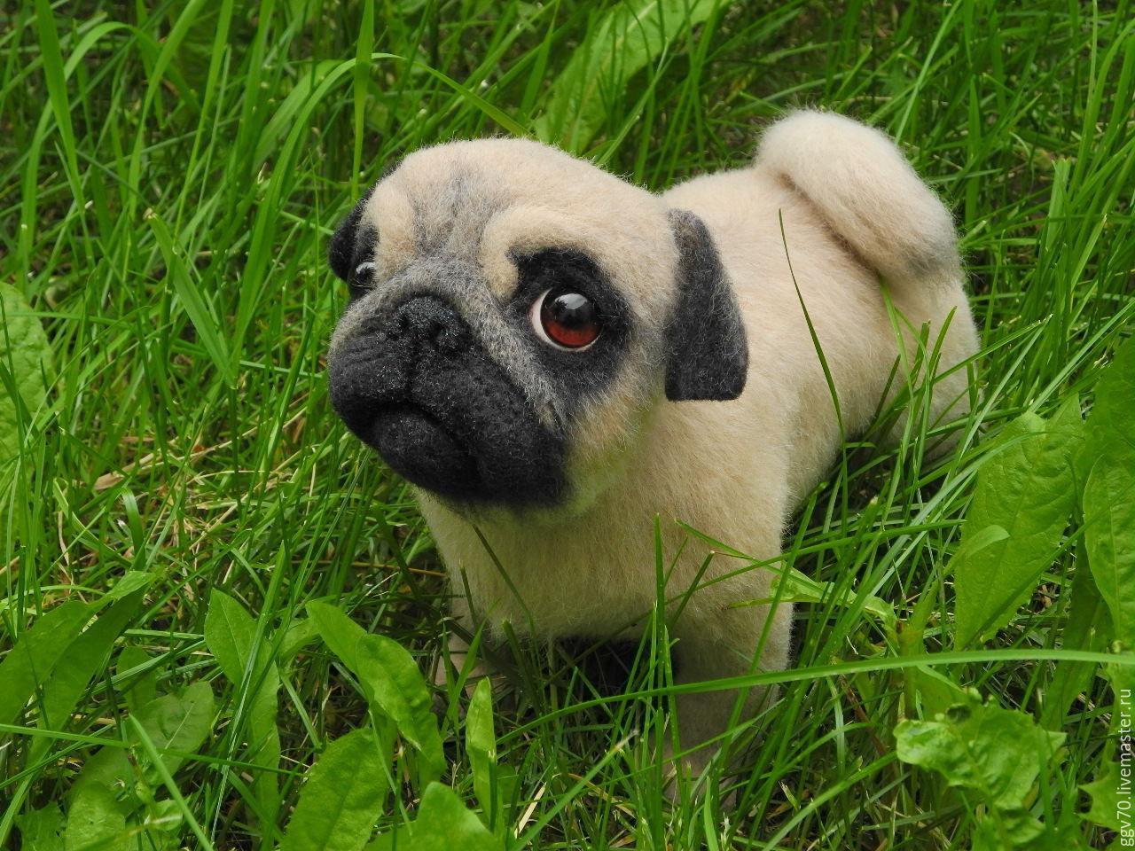 фото щенок мопс
