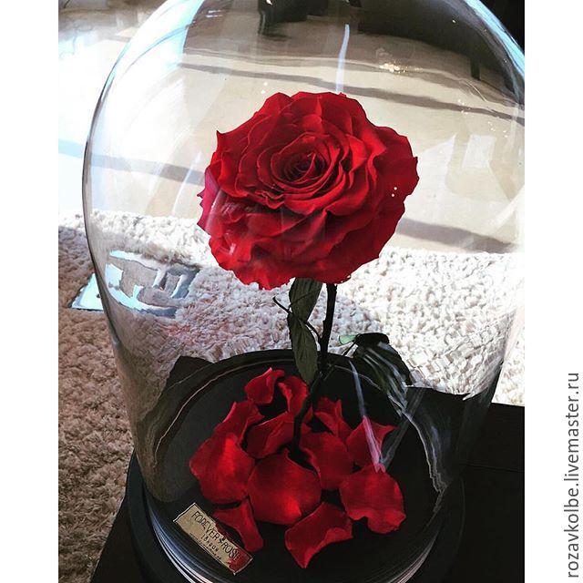 Купить живая роза в колбе