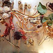 Сухоцветы ручной работы. Ярмарка Мастеров - ручная работа Набор сухоцветов для смолы и открыток. Handmade.