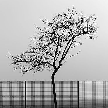 """Картины и панно ручной работы. Ярмарка Мастеров - ручная работа Фотокартина """"Городская природа"""". Handmade."""