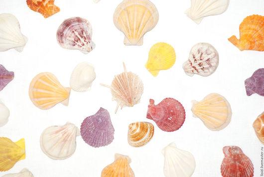 Материалы для флористики ручной работы. Ярмарка Мастеров - ручная работа. Купить Ракушки морские ( малые). Handmade. Ракушки, раковины