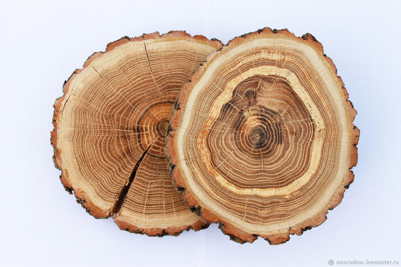 Картинки дерево в разрезе для детей