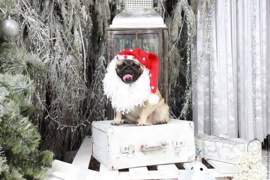 Одежда для собак, ручной работы. Ярмарка Мастеров - ручная работа. Купить Дед Мороз. Handmade. Комбинированный, карнавальный костюм