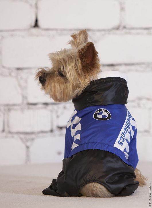 Одежда для собак, ручной работы. Ярмарка Мастеров - ручная работа. Купить Комбинезон для собаки Атлетикс. Handmade. Комбинированный, Йоркширский терьер