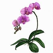 Картины и панно ручной работы. Ярмарка Мастеров - ручная работа Орхидея. акварель. Handmade.