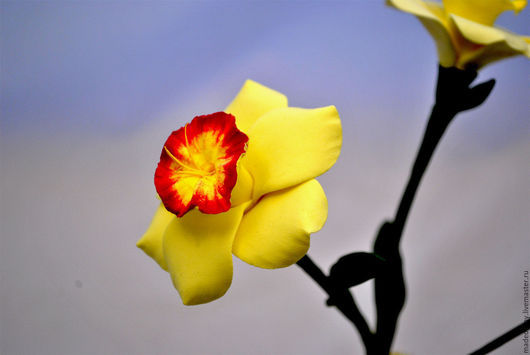 """Цветы ручной работы. Ярмарка Мастеров - ручная работа. Купить Нарцисс из полимерной глины """" Солнечный цветок"""". Handmade. Белый"""