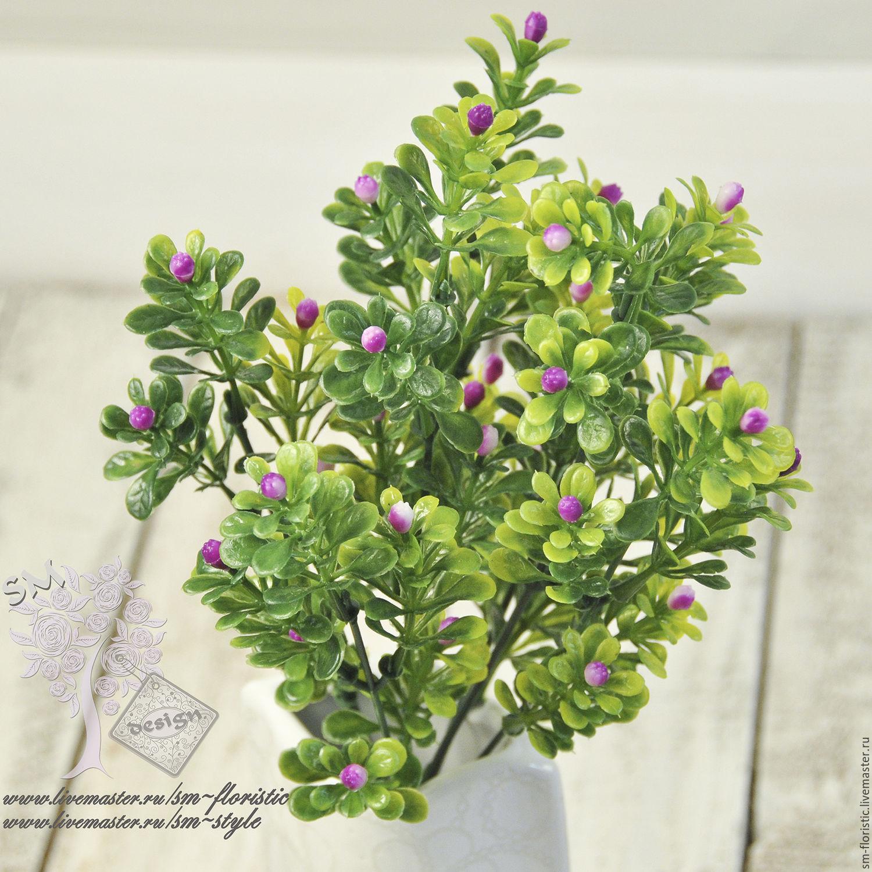 самшит фото цветок