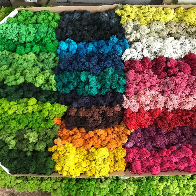 Цветной мох декоративный (1 кг) от производителя, Кухня, Белгород,  Фото №1