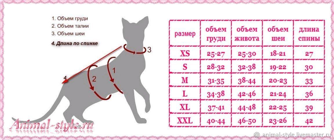 Размеры собак картинки
