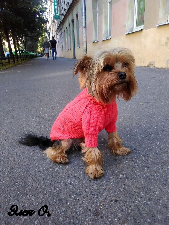 Свитер для собак с аранами от Элен Овчинниковой, Одежда для питомцев, Санкт-Петербург, Фото №1