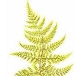 Crystal fern - Ярмарка Мастеров - ручная работа, handmade