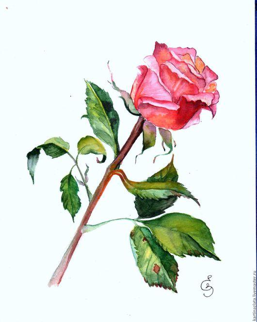 Нежный, красивый цветок так любимый многими женщинами