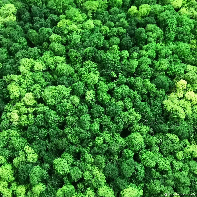 Стабилизированный мох купить оптом от производителя нижний новгород оверлок juki купить в новосибирске