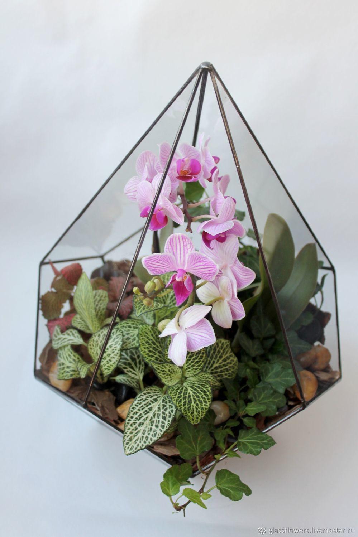 Орхидариум. Флорариум. Геометрический флорариум с орхидеей, Композиции, Санкт-Петербург, Фото №1