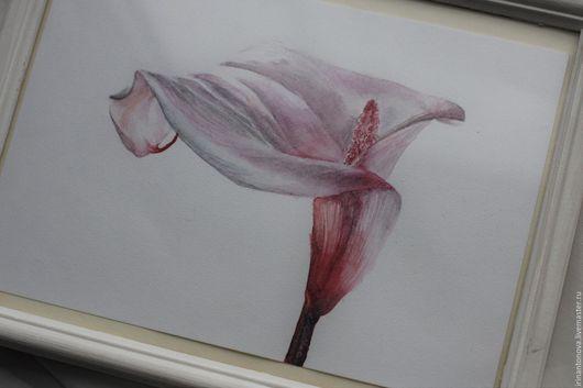 Картины цветов ручной работы. Ярмарка Мастеров - ручная работа. Купить Акварельный цветок - Белокрыльник (Calla). Handmade. Акварель