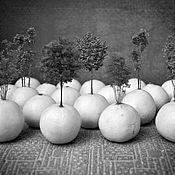 """Картины и панно ручной работы. Ярмарка Мастеров - ручная работа Фотокартина """"Апельсиновая роща"""". Handmade."""