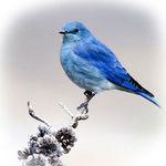 Игрушки Синей птицы - Ярмарка Мастеров - ручная работа, handmade