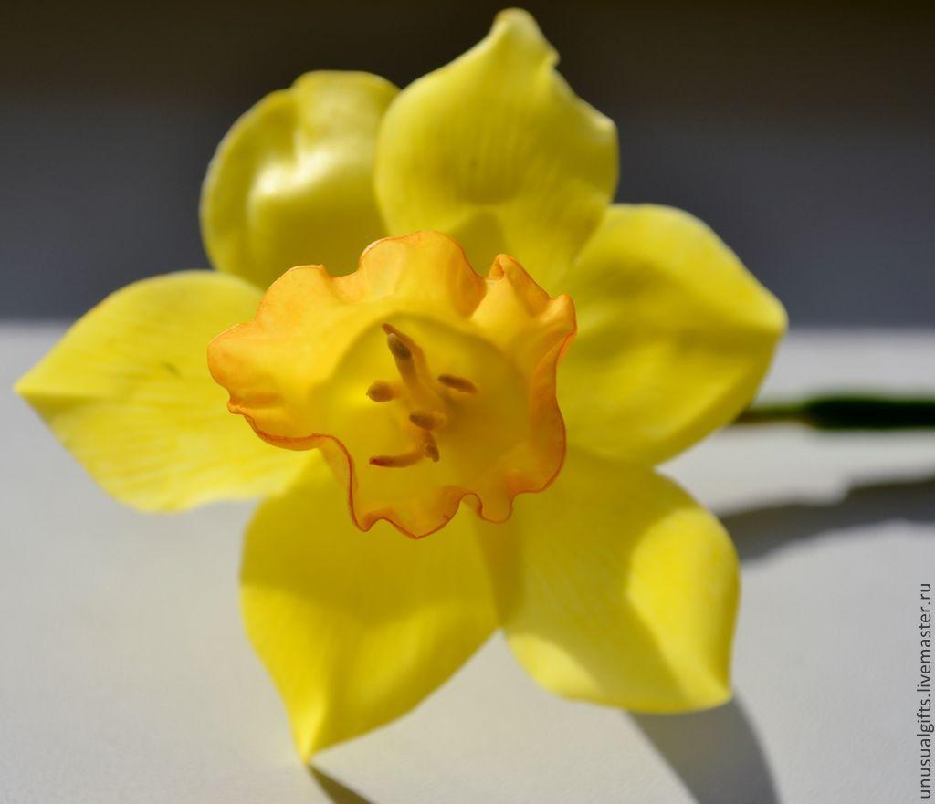 Подарок цветок нарцисс 100