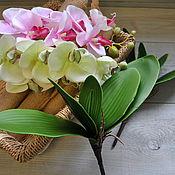 Листья орхидеи 5 листов на стебле, 2541