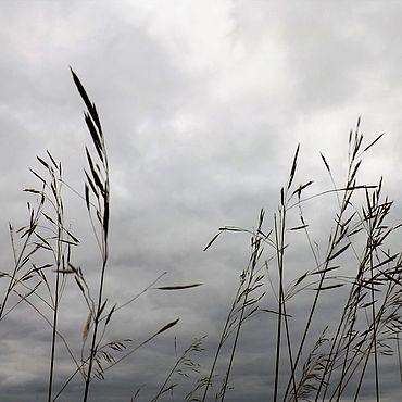 Картины и панно ручной работы. Ярмарка Мастеров - ручная работа Фотокартина Серый шелест трав.. Handmade.