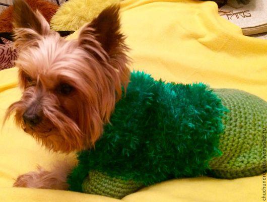 Одежда для собак, ручной работы. Ярмарка Мастеров - ручная работа. Купить Комбинезон Лесной. Handmade. Ярко-зелёный, чихуа, Кошки