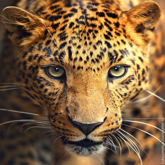 Вышивка ручной работы. Ярмарка Мастеров - ручная работа. Купить Портрет леопарда. Алмазная живопись. Handmade. Рыжий, леопард, портрет