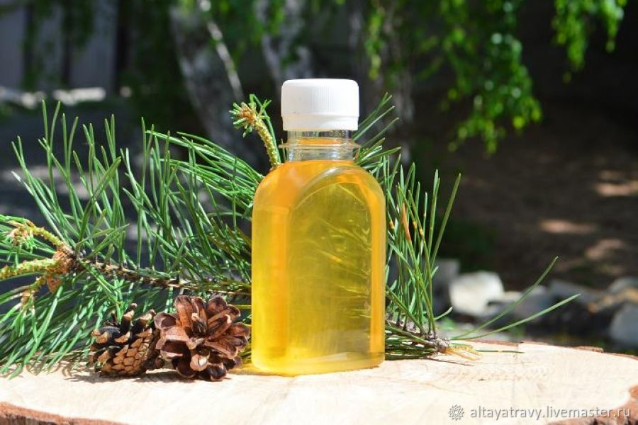 Cedar oleoresin on cedar oil, Grass, Kemerovo,  Фото №1