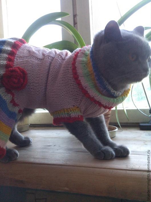 """Одежда для собак, ручной работы. Ярмарка Мастеров - ручная работа. Купить Вязаное платье для маленькой собачки """" Розочка"""". Handmade."""