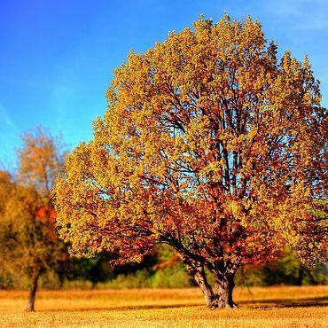 Сувениры и подарки ручной работы. Ярмарка Мастеров - ручная работа Осенний пейзаж. Открытки для посткроссинга. Handmade.
